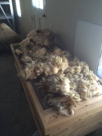 We can skirt your fleece for you, removing manure-tags and lumps of vegetation.